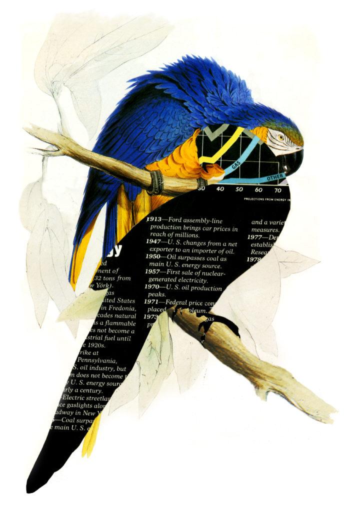 Energetic Parrots