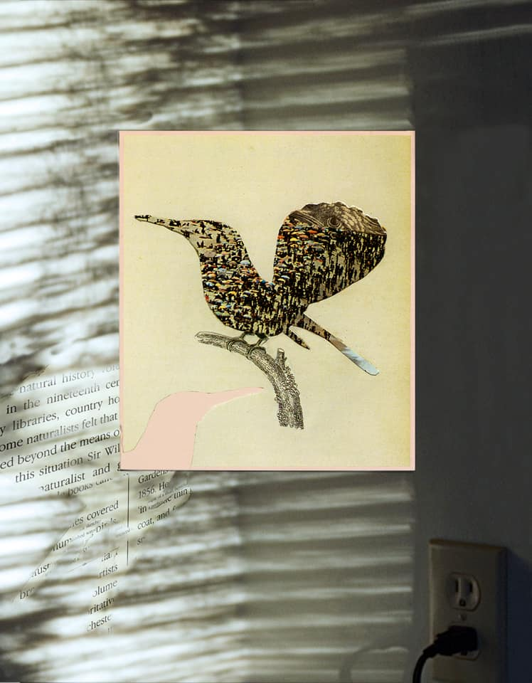 Elusive Hummingbird