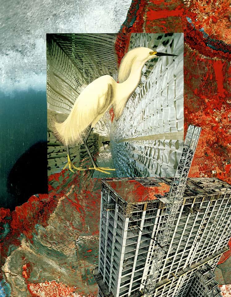 Audubon's Egret in New Florida