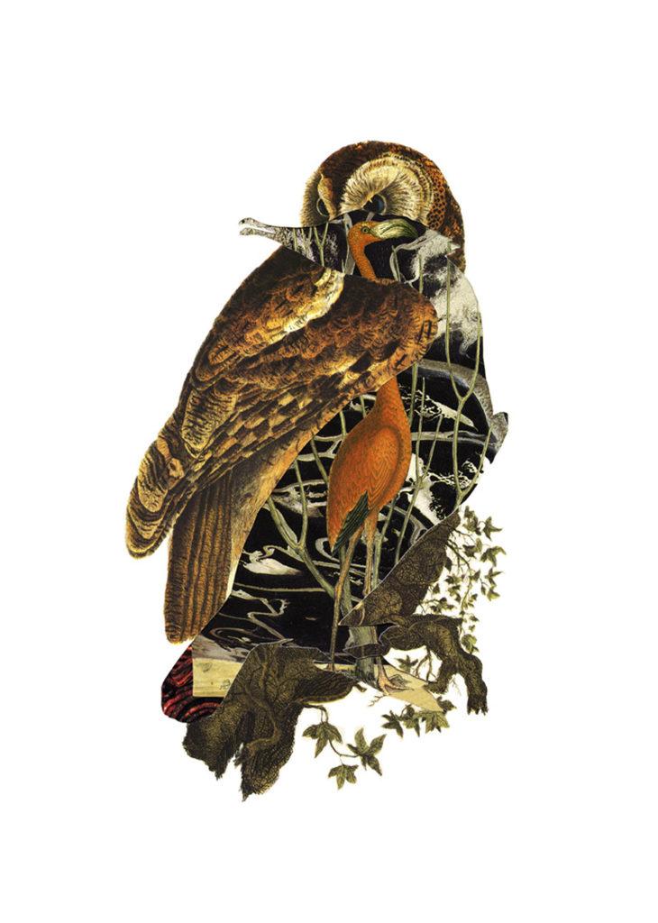 The Banished Cormorant